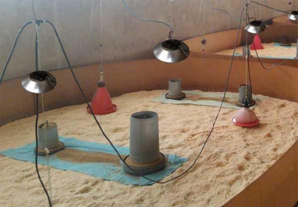 riscaldatore ad infrarosso per pulcini e suinetti